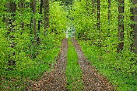 Track through forest in spring with lush green foliage. Bavaria, Germany. Stock Photo - Premium Royalty-Free, Code: 600-06732564