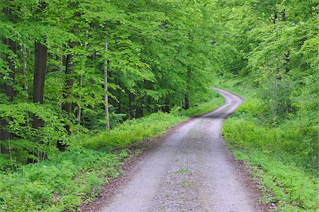 Forest cart road through spring beech forest with lush green foliage. Hainich National Park, Thuringia, Germany. Stock Photo - Premium Royalty-Free, Code: 600-06732579
