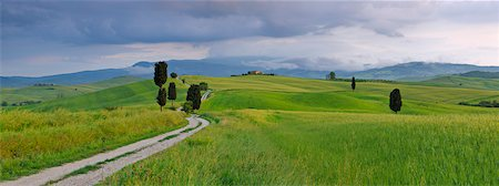 scenic view - Cypress trees along country road, green fields. Pienza, Val d'Orcia, Tuscany, Italy. Stock Photo - Premium Royalty-Free, Code: 600-06732587