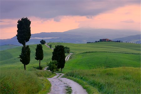 Cypress trees along country road, sunset. Pienza, Val d'Orcia, Tuscany, Italy. Stock Photo - Premium Royalty-Free, Code: 600-06732588