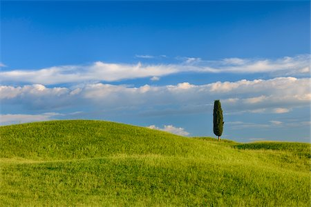 Cypress tree in green field. Pienza, Val d´Orcia, Tuscany, Italy. Stock Photo - Premium Royalty-Free, Code: 600-06732616