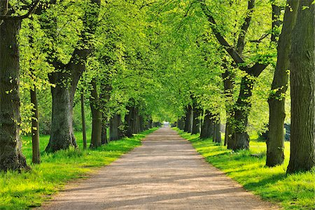 scenic and spring (season) - Lime Tree Avenue in Spring, Aschaffenburg, Bavaria, Spessart, Germany Stock Photo - Premium Royalty-Free, Code: 600-06758226