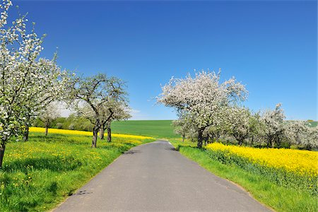 spring - Road with Blooming Apple Trees in Spring, Schmachtenberg, Spessart, Bavaria, Germany Stock Photo - Premium Royalty-Free, Code: 600-06758231