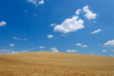 Wheat Field with Puffy Clouds in Sky in Summer, Val d Orcia, Siena Province, Tuscany, Italy Stock Photo - Premium Royalty-Free, Code: 600-06758327