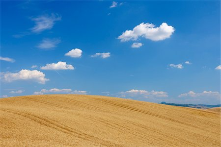 Wheat Field with Puffy Clouds in Sky in Summer, Val d Orcia, Siena Province, Tuscany, Italy Stock Photo - Premium Royalty-Free, Code: 600-06758330