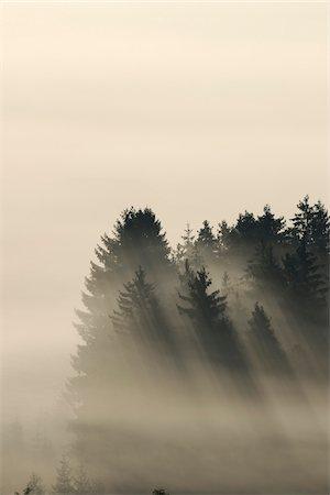 dreamy - Morning Mist, Kochelmoor, Bad Tolz-Wolfratshausen, Upper Bavaria, Bavaria, Germany Stock Photo - Premium Royalty-Free, Code: 600-06758358