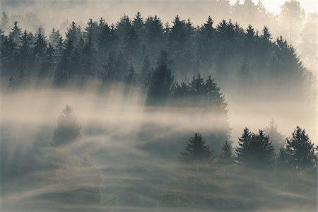 fog (weather) - Morning Mist, Kochelmoor, Bad Tolz-Wolfratshausen, Upper Bavaria, Bavaria, Germany Stock Photo - Premium Royalty-Free, Code: 600-06758360