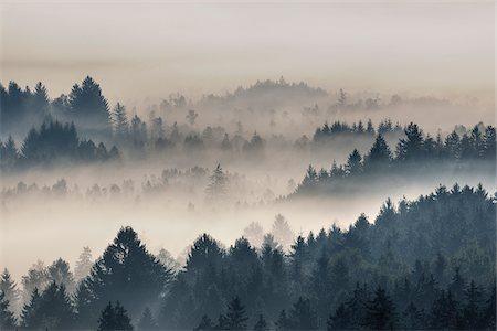 dreamy - Morning Mist, Kochelmoor, Bad Tolz-Wolfratshausen, Upper Bavaria, Bavaria, Germany Stock Photo - Premium Royalty-Free, Code: 600-06758363