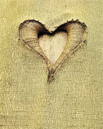 Heart Carved into Beech Tree Trunk, Hallerbos, Halle, Flemish Brabant, Vlaams Gewest, Belgium Stock Photo - Premium Royalty-Free, Code: 600-06752581