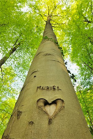 Heart and Name Carved into Beech Tree Trunk, Hallerbos, Halle, Flemish Brabant, Vlaams Gewest, Belgium Stock Photo - Premium Royalty-Free, Code: 600-06752582