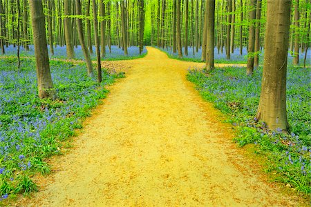 Path with Crossroads in Beech Forest with Bluebells in Spring, Hallerbos, Halle, Flemish Brabant, Vlaams Gewest, Belgium Stock Photo - Premium Royalty-Free, Code: 600-06752600