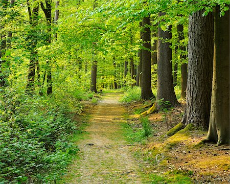 forest - Path through Forest in Spring, Hallerbos, Halle, Flemish Brabant, Vlaams Gewest, Belgium Stock Photo - Premium Royalty-Free, Code: 600-06752602