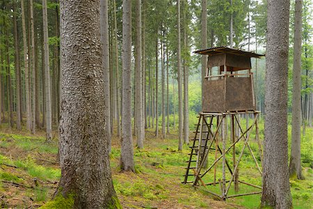 Hunting Blind in Spruce forest, Spessart, Bavaria, Germany, Europe Stock Photo - Premium Royalty-Free, Code: 600-06808872