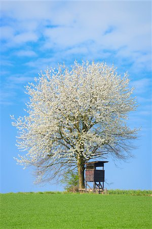 Hunting blind and blossoming tree on hill, Hesse, Germany, Europe Stock Photo - Premium Royalty-Free, Code: 600-06803927
