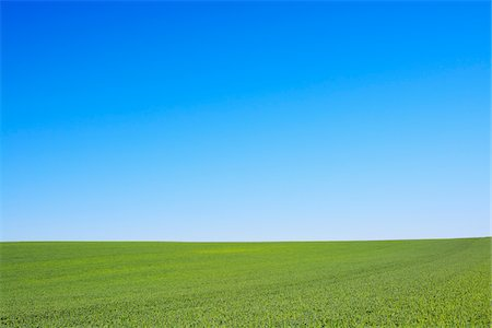 Grain field and Blue Sky, Hesse, Germany, Europe Stockbilder - Premium RF Lizenzfrei, Bildnummer: 600-06841703