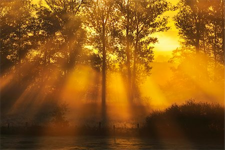 Sun Shining through Trees with Morning Mist, Flieden, Hesse, Germany Stock Photo - Premium Royalty-Free, Code: 600-06899700