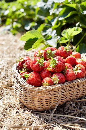 strawberries - Close-up of basket of strawberries in field, Germany Stock Photo - Premium Royalty-Free, Code: 600-06899776