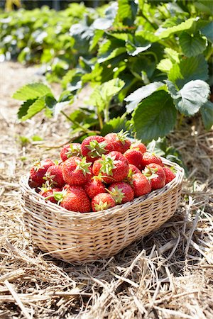 strawberries - Close-up of basket of strawberries in field, Germany Stock Photo - Premium Royalty-Free, Code: 600-06899779