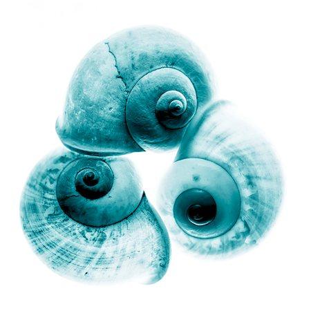 Close-up of Snail Shells, Studio Shot Stock Photo - Premium Royalty-Free, Code: 600-06936047