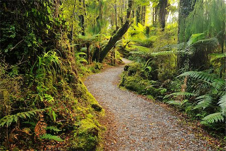 Path through Temperate Rain Forest, Haast, West Coast, South Island, New Zealand Stock Photo - Premium Royalty-Free, Code: 600-06964226