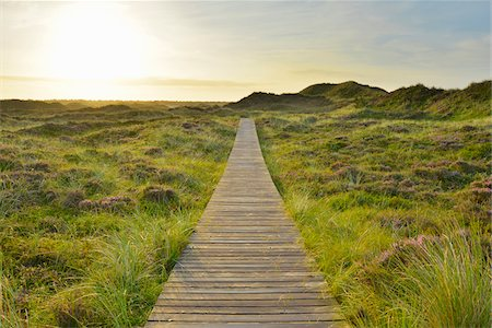 scenic view - Wooden Walkway through Dunes with Sun, Summer, Norddorf, Amrum, Schleswig-Holstein, Germany Stock Photo - Premium Royalty-Free, Code: 600-06964235