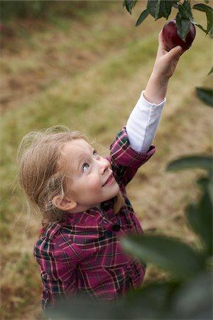 single fruits tree - Girl Picking Apples in Orchard, Milton, Ontario, Canada Stock Photo - Premium Royalty-Free, Code: 600-07110431