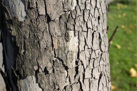 seamless - Close-up of Bark on Tree Trunk in Autumn, Spreepark, Berlin, Germany Stock Photo - Premium Royalty-Free, Code: 600-07110636