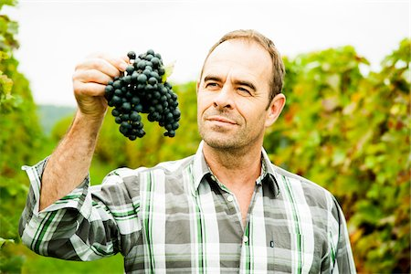 Portrait of grape grower standing in vineyard, examining bundle of grapes, Rhineland-Palatinate, Germany Stock Photo - Premium Royalty-Free, Code: 600-07148213