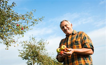 single fruits tree - Portrait of farmer holding apples in orchard, Germany Stock Photo - Premium Royalty-Free, Code: 600-07148345