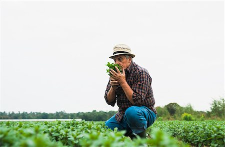 smelling - Farmer in field, holding and smelling leaves from crop, Germany Stock Photo - Premium Royalty-Free, Code: 600-07148353