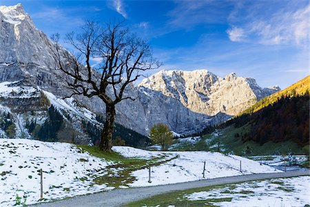 Old Bare Sycamore Maple Tree (Acer pseudoplatanus) in first snow in front of Karwendel Mountains, Grosser Ahornboden, Alpine Park Karwendel, Tyrol, Austria Foto de stock - Royalty Free Premium, Número: 600-07143676