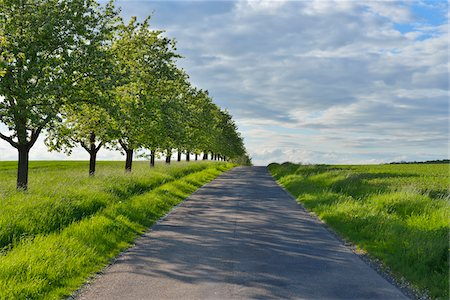 Road Lined with Fruit Trees in Spring, Bad Mergentheim, Baden Wurttemberg, Germany Stockbilder - Premium RF Lizenzfrei, Bildnummer: 600-07156282