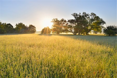 streams scenic nobody - Meadow and Willow Trees at Morning with Sun, Kahl, Alzenau, Bavaria, Germany Stock Photo - Premium Royalty-Free, Code: 600-07156454