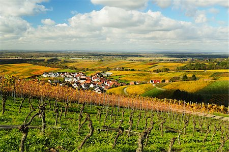 quaint - Vineyard Landscape and Varnhalt Village, Ortenau, Baden Wine Route, Baden-Wurttemberg, Germany Stock Photo - Premium Royalty-Free, Code: 600-07199359