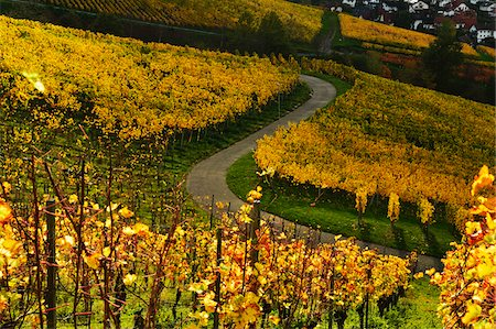 Vineyard Landscape, Ortenau, Baden Wine Route, Baden-Wurttemberg, Germany Stock Photo - Premium Royalty-Free, Code: 600-07199364