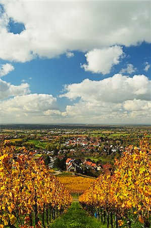 Vineyard Landscape and Steinbach Village, Ortenau, Baden Wine Route, Baden-Wurttemberg, Germany Stock Photo - Premium Royalty-Free, Code: 600-07199363