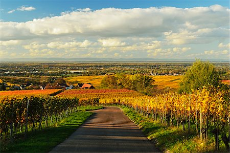 Vineyard Landscape, Ortenau, Baden Wine Route, Baden-Wurttemberg, Germany Stock Photo - Premium Royalty-Free, Code: 600-07199377