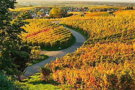 Vineyard Landscape, Ortenau, Baden Wine Route, Baden-Wurttemberg, Germany Stock Photo - Premium Royalty-Free, Code: 600-07199381