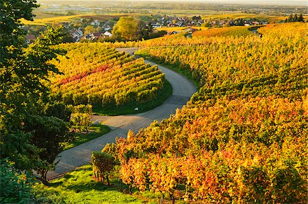 Vineyard Landscape, Ortenau, Baden Wine Route, Baden-Wurttemberg, Germany Stock Photo - Premium Royalty-Free, Code: 600-07199381