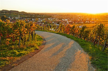Vineyard Landscape and Buhlertal Village, Ortenau, Baden Wine Route, Baden-Wurttemberg, Germany Stock Photo - Premium Royalty-Free, Code: 600-07199382