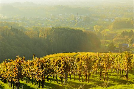 Vineyard Landscape, Ortenau, Baden Wine Route, Baden-Wurttemberg, Germany Stock Photo - Premium Royalty-Free, Code: 600-07199401
