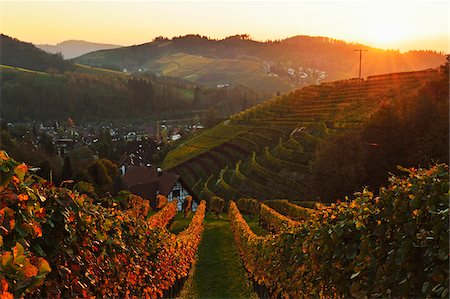 Vineyard Landscape and Sasbachwalden Village, Ortenau, Baden Wine Route, Baden-Wurttemberg, Germany Stock Photo - Premium Royalty-Free, Code: 600-07199403
