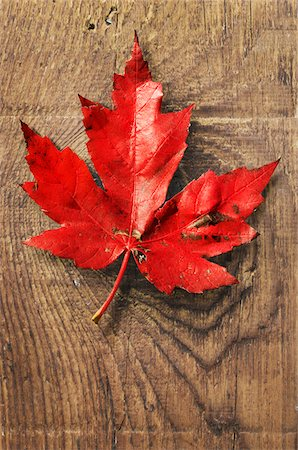 Close-up of Red Maple Leaf on old barn Board Stock Photo - Premium Royalty-Free, Code: 600-07199433