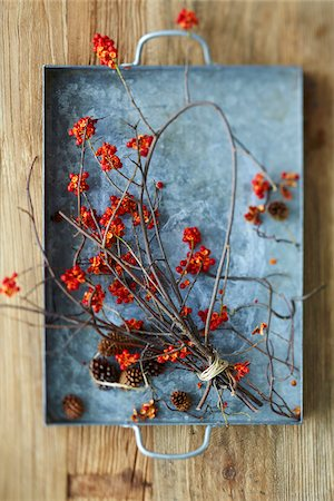 Overhead View of American Bittersweet Vine Dried with Pinecones on Metal Tray as Fall Decor Stock Photo - Premium Royalty-Free, Code: 600-07204020