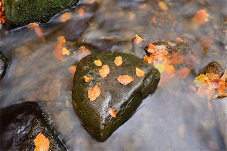 flowing - Stones in Little Stream in Autumn in Bavarian Forest, Spiegelau, Bavaria, Germany Stock Photo - Premium Royalty-Free, Code: 600-07206640