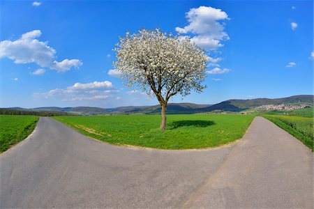fork - Forked Road with Blossoming Cherry in Spring, Miltenberg, Spessart, Franconia, Bavaria, Germany Stock Photo - Premium Royalty-Free, Code: 600-07278730