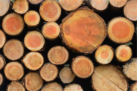 forestry - Stack of Spruce Logs, Odenwald, Hesse, Germany Stock Photo - Premium Royalty-Free, Code: 600-07279117