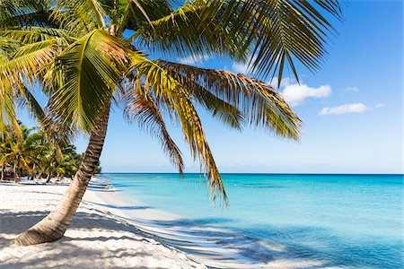 palm - Coconut palm trees and white beach by turquoise clear water, Del Este National Park (Parque Nacional del Este), Dominican Republic, Caribbean Stock Photo - Premium Royalty-Free, Code: 600-07311199