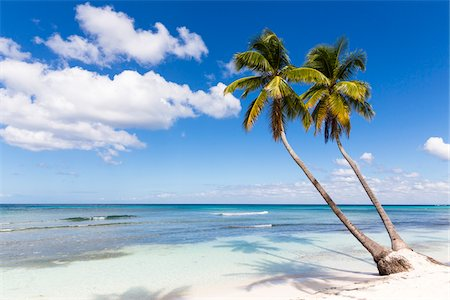 palm - Coconut palm trees and white beach by turquoise clear water, Del Este National Park (Parque Nacional del Este), Dominican Republic, Caribbean Stock Photo - Premium Royalty-Free, Code: 600-07311207