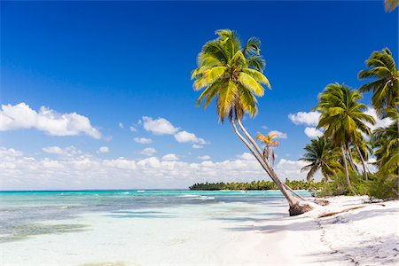 palm - Coconut palm trees and white beach by turquoise clear water, Del Este National Park (Parque Nacional del Este), Dominican Republic, Caribbean Stock Photo - Premium Royalty-Free, Code: 600-07311211